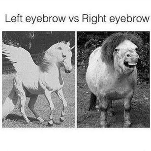 Horse_EyebrowMeme